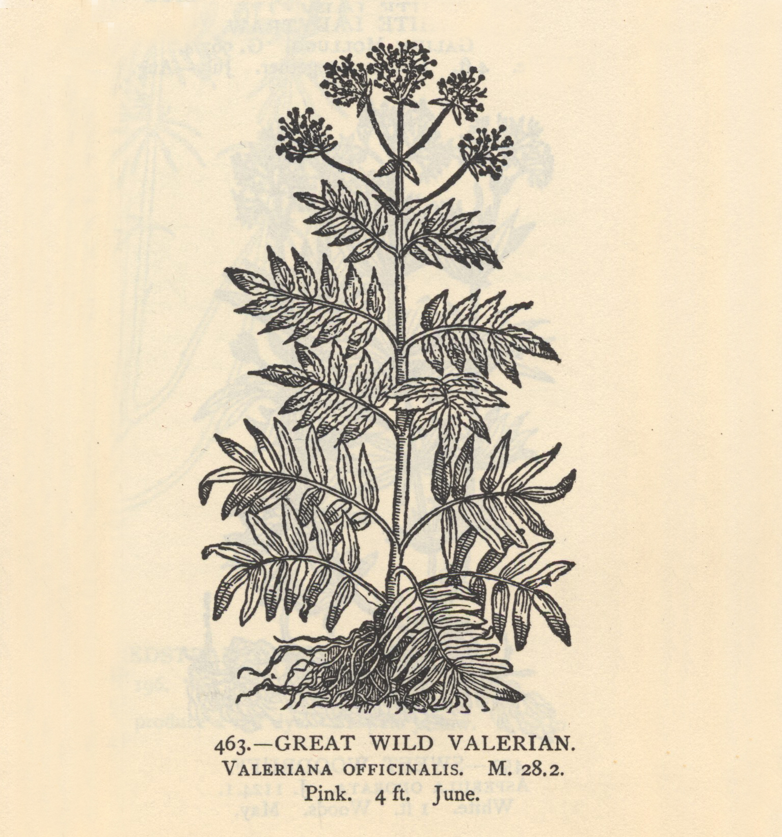 Valerian, Bromide and Queen Square
